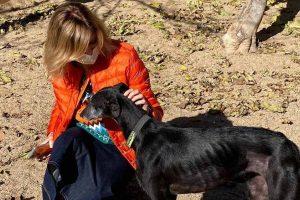 Susanna Griso pide ayuda desesperada a sus seguidores tras perder a su perra