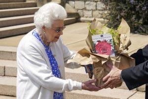 La reina Isabel planta la rosa 'duque de Edimburgo' cuando su marido habría cumplido 100 años